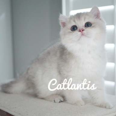 Bluegolden Fianca of Catlantis -- stays with us